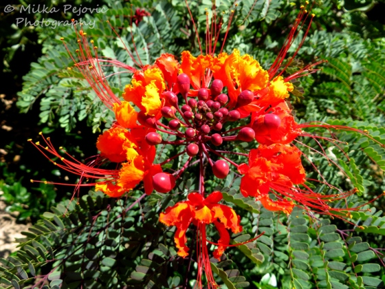 Floral Friday Fotos: red bird of paradise flowers