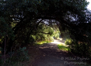 A Word A Week Photo Challenge – Frame - tree branches curling over walking path