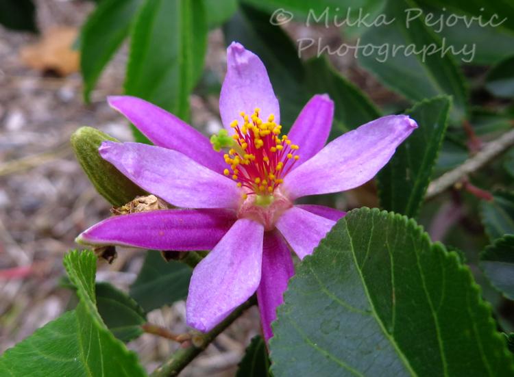 Macro Monday: light purple flowers