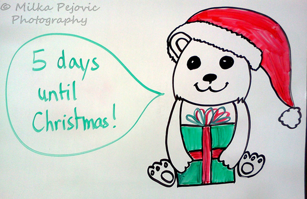 Christmas countdown: baby polar bear