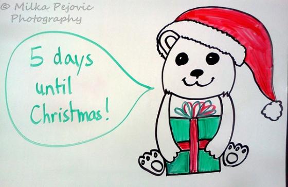 Christmas countdown: baby polar bear
