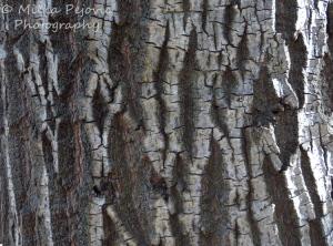 Cee's Fun Foto Challenge: Texture of tree bark