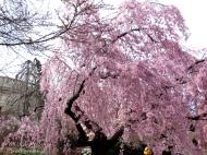 Travel theme: Blossom