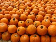 A Word A Week Photo Challenge –Orange