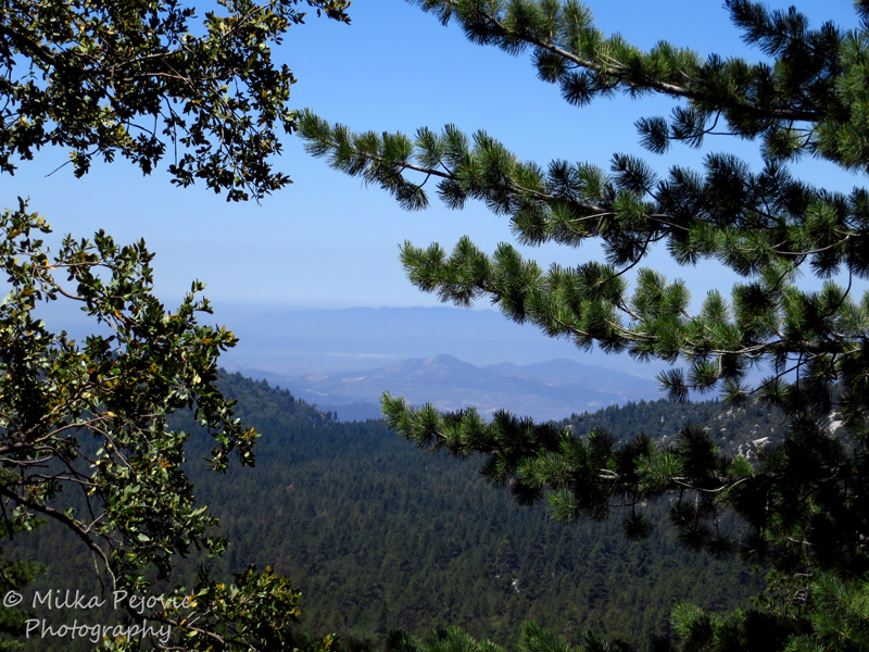 Wordpress weekly photo challenge: adventure hiking in the woods of Idyllwild
