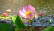 Floral Friday Fotos: Pink lotusflower